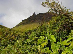 vegetation de La Soufrière
